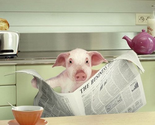 animal-reading-newspaper